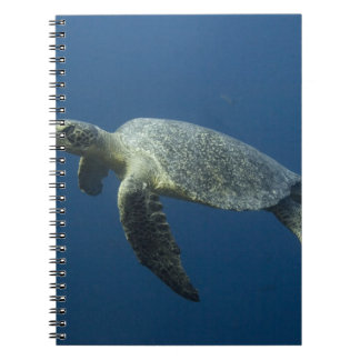 Green Turtle (Chelonia mydas agassisi) off Wolf Notebooks