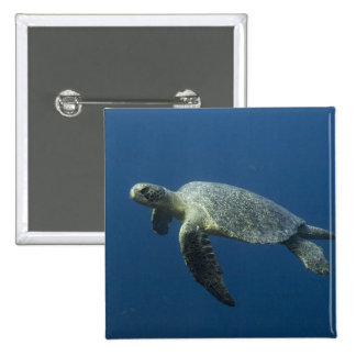 Green Turtle (Chelonia mydas agassisi) off Wolf Pinback Button