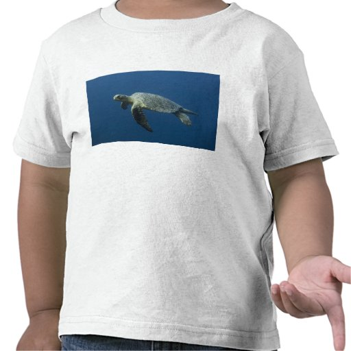 Green Turtle (Chelonia mydas agassisi) off Wolf Tee Shirts