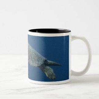 Green Turtle (Chelonia mydas agassisi) off Wolf Two-Tone Coffee Mug