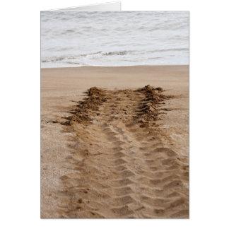 Green Turtle Chelonia mydas agassisi) Tracks Card