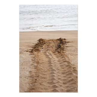 Green Turtle Chelonia mydas agassisi) Tracks Photo Print