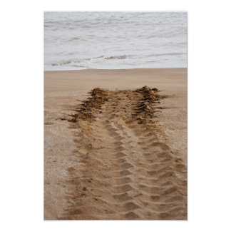 Green Turtle Chelonia mydas agassisi) Tracks Poster