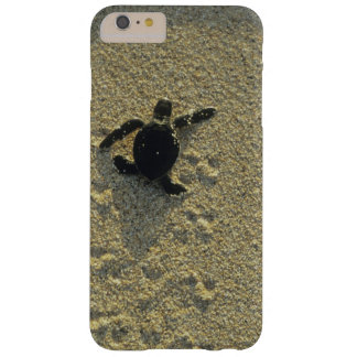 Green Turtle, (Chelonia mydas), hatchling Barely There iPhone 6 Plus Case