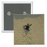 Green Turtle, (Chelonia mydas), hatchling Pinback Buttons