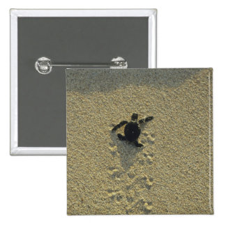 Green Turtle, (Chelonia mydas), hatchling 2 Inch Square Button