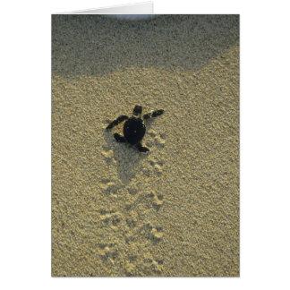 Green Turtle, (Chelonia mydas), hatchling Greeting Card