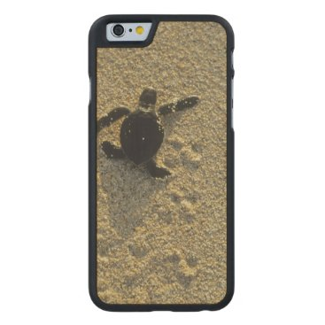 Toddler & Baby themed Green Turtle, (Chelonia mydas), hatchling Carved Maple iPhone 6 Case