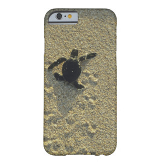 Green Turtle, (Chelonia mydas), hatchling Barely There iPhone 6 Case