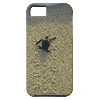 Green Turtle, (Chelonia mydas), hatchling iPhone 5 Cases