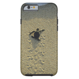 Green Turtle, (Chelonia mydas), hatchling Tough iPhone 6 Case