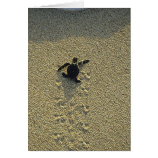 Green Turtle, (Chelonia mydas), hatchling Greeting Card