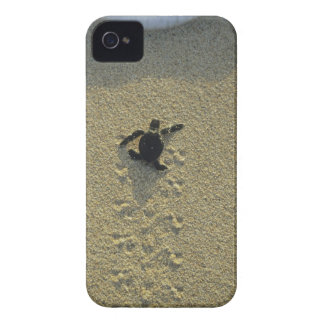 Green Turtle, (Chelonia mydas), hatchling iPhone 4 Cover
