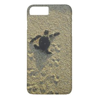 Green Turtle, (Chelonia mydas), hatchling iPhone 8 Plus/7 Plus Case