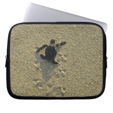 Toddler & Baby themed Green Turtle, (Chelonia mydas), hatchling Laptop Sleeve