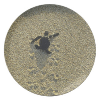 Green Turtle, (Chelonia mydas), hatchling Melamine Plate