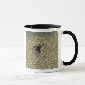 Green Turtle, (Chelonia mydas), hatchling Mug