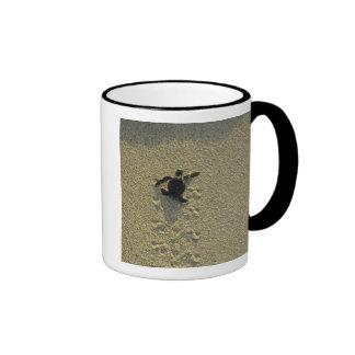 Green Turtle, (Chelonia mydas), hatchling Ringer Coffee Mug