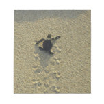 Green Turtle, (Chelonia mydas), hatchling Note Pads