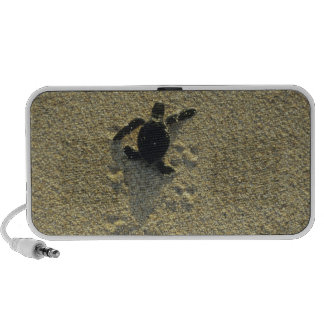 Green Turtle, (Chelonia mydas), hatchling Portable Speaker