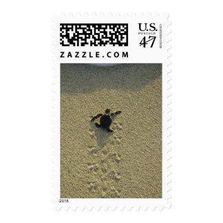 Green Turtle, (Chelonia mydas), hatchling Postage Stamp