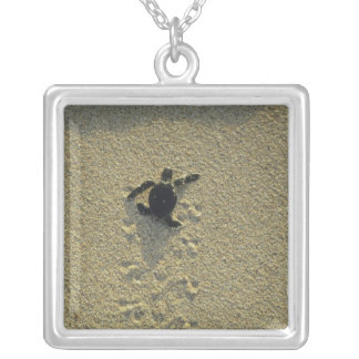 Green Turtle, (Chelonia mydas), hatchling Silver Plated Necklace