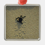 Green Turtle, (Chelonia mydas), hatchling Square Metal Christmas Ornament