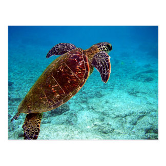 Green Turtle Chelonia Mydas is going for the air Postcard