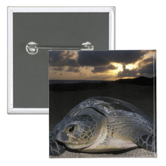 Green Turtle, (Chelonia mydas) nesting female on 2 Inch Square Button