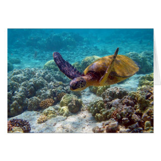 Green Turtle Chelonia Mydas Swimming Card