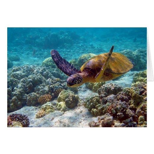 Green Turtle Chelonia Mydas Swimming Greeting Card
