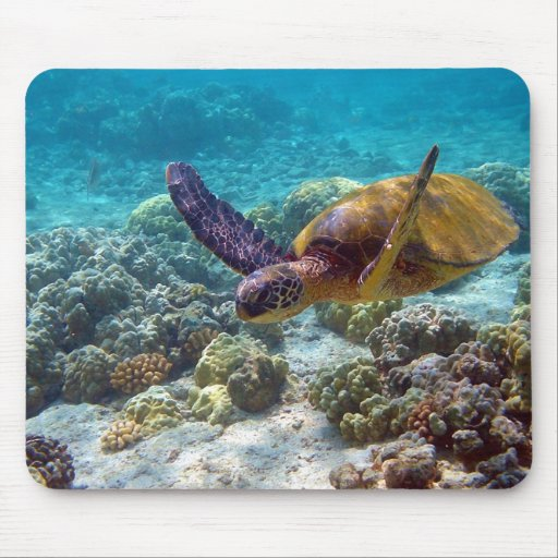 Green Turtle Chelonia Mydas Swimming Mouse Pad