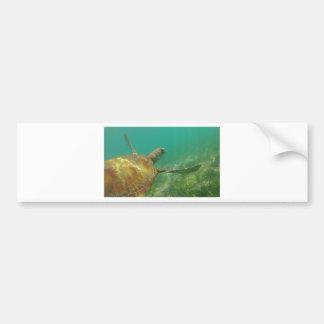 Green-turtle-Great-Barrier-Reef.JPG Bumper Sticker