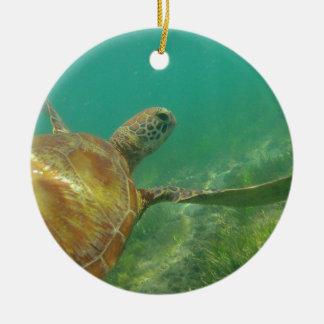 Green-turtle-Great-Barrier-Reef.JPG Adorno Redondo De Cerámica
