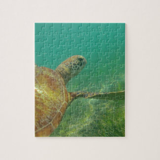 Green-turtle-Great-Barrier-Reef.JPG Rompecabezas Con Fotos