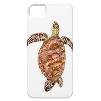 Green turtle - green Turtle Chelonia mydas iPhone SE/5/5s Case