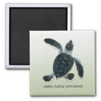 Green Turtle Hatchling Magnet