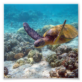 Green Turtle Photo Print