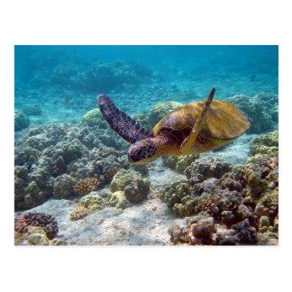 Green Turtle Postcard