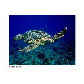 green turtle postcard - 01