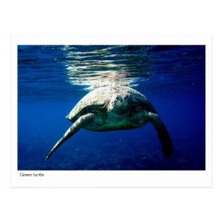 Green turtle postcard - 02