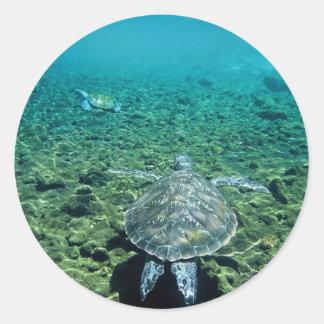 Green turtle underwater Western Samoa Classic Round Sticker