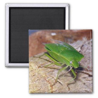 Green Vegetable Bug Magnet