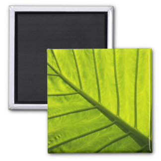 Green veined leaves of tropical foliage in 2 fridge magnet