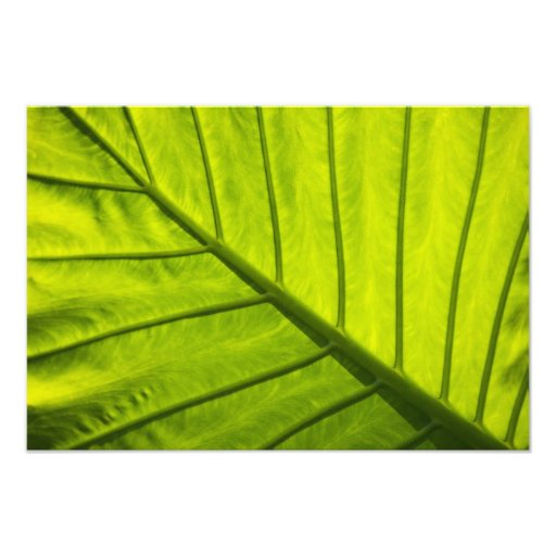 Green veined leaves of tropical foliage in 2 photo print