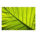 Green veined leaves of tropical foliage in 2 photo art