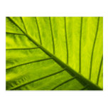 Green veined leaves of tropical foliage in 2 postcard