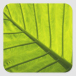 Green veined leaves of tropical foliage in 2 square sticker