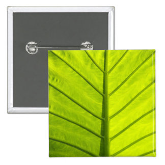 Green veined leaves of tropical foliage in pinback button