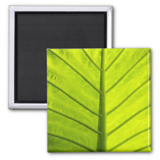 Green veined leaves of tropical foliage in fridge magnet